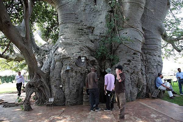 6000-year-old-hollowed-tree-bar-inside-99854.jpg