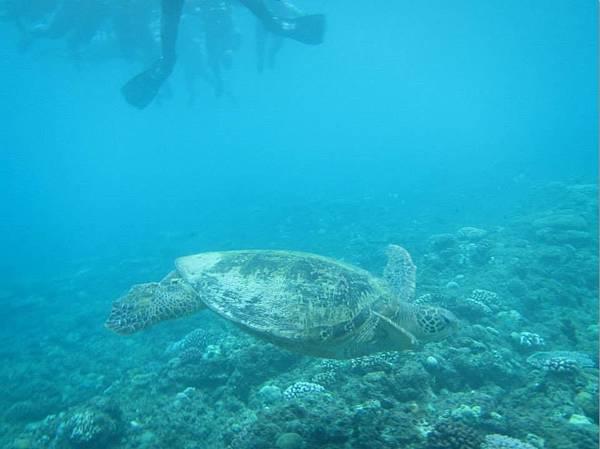 小琉球浮潛014A