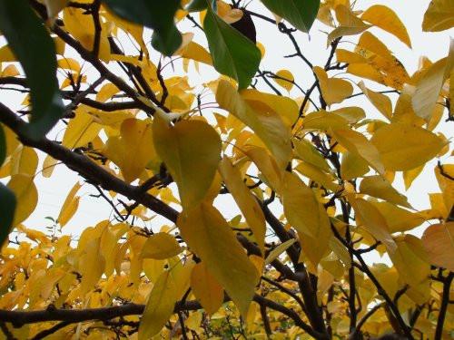 Fall foliage 10-27-2011