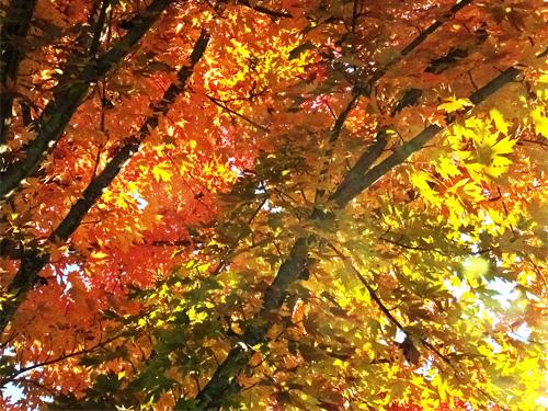 Fall foliage 10-27-2013