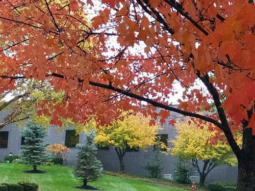 Fall foilage 10-29-2013