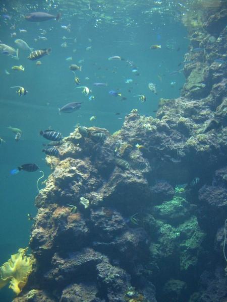 海生館珊瑚區