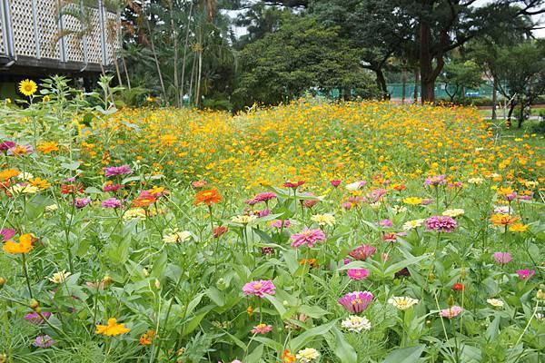 台大校園的花
