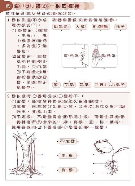 2月札根伸展學習單03
