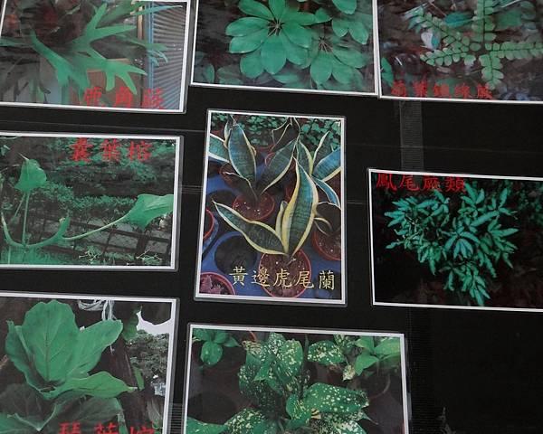 植物園活動一 (2).jpg