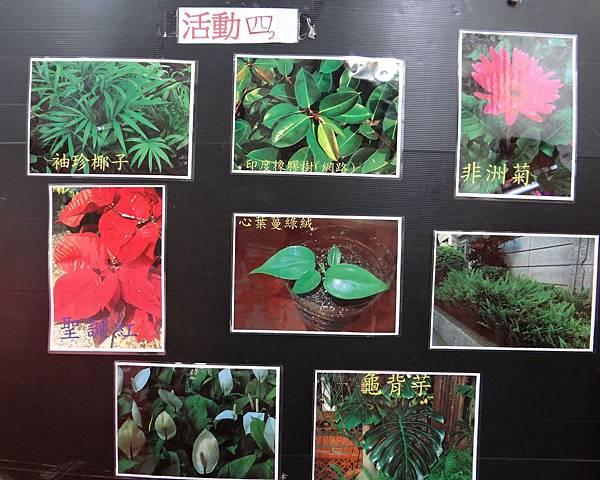 植物園活動四 (2).jpg