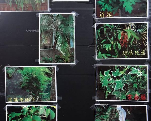 植物園活動四.jpg