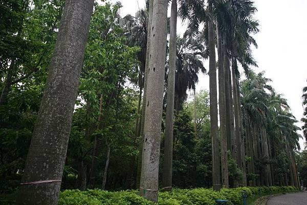 20161228-植物園老照片行前導覽資料.-to 老師們_頁面_49-1.jpg