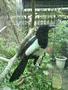 自己飛到相機前面的鳥