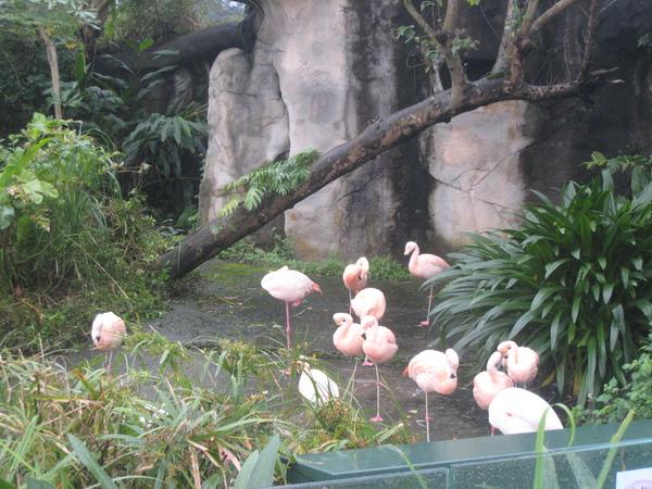 單腳站立的一群紅鶴