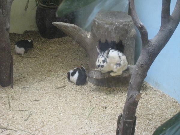 斑點兔+胖胖天竺鼠