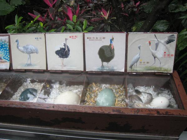 不同鳥的蛋
