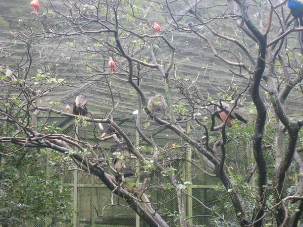 不同的鳥集結在一起