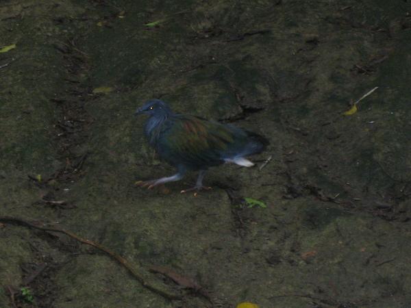 可愛的鳥~1