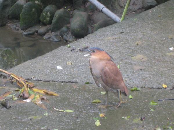 可愛的鳥~3