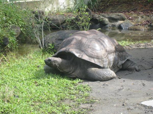 像假的世上第二大龜