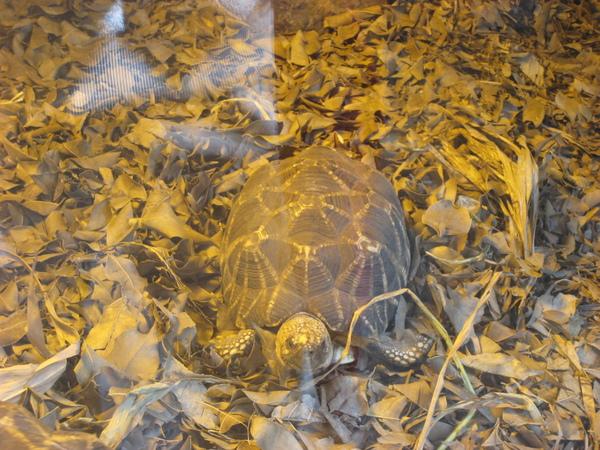 小烏龜~2