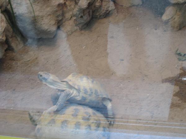 疊再一起的小烏龜