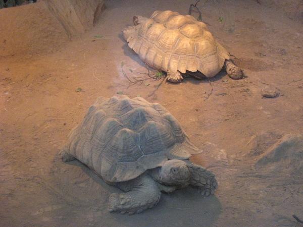 小烏龜~4