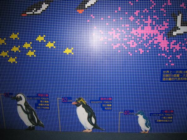 企鵝排排站~1
