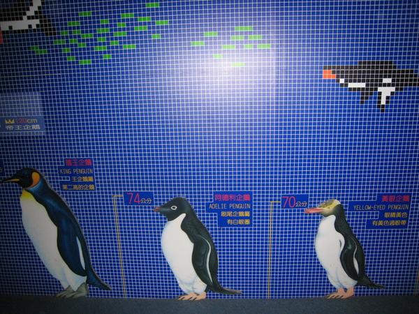企鵝排排站~2