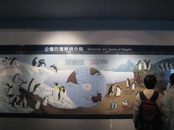 全球有十八種企鵝