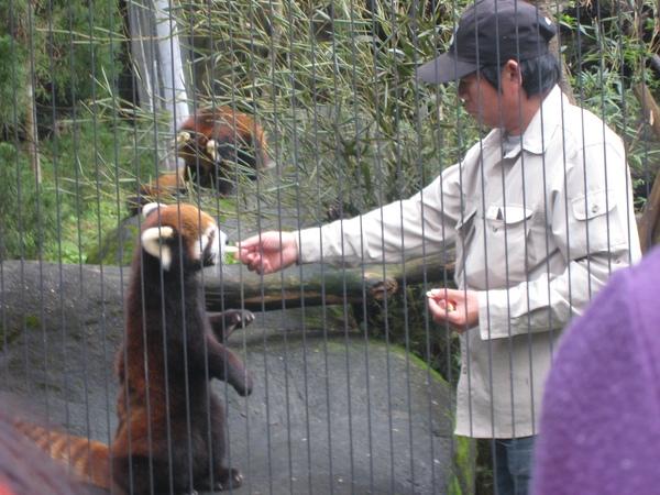 浣熊餵食秀~1