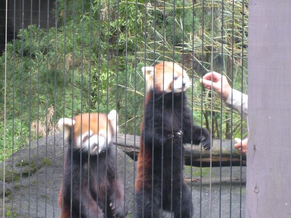 浣熊餵食秀~2