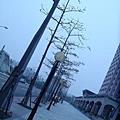板橋車站 行道樹