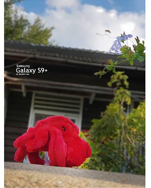 sx6.jpg