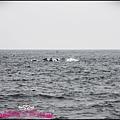 賞鯨1 (11).JPG