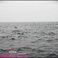 賞鯨1 (12).JPG