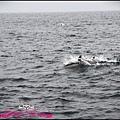 賞鯨1 (10).JPG