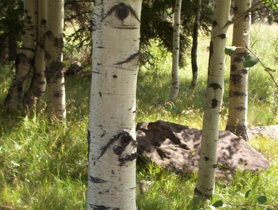 長眼睛的樹?