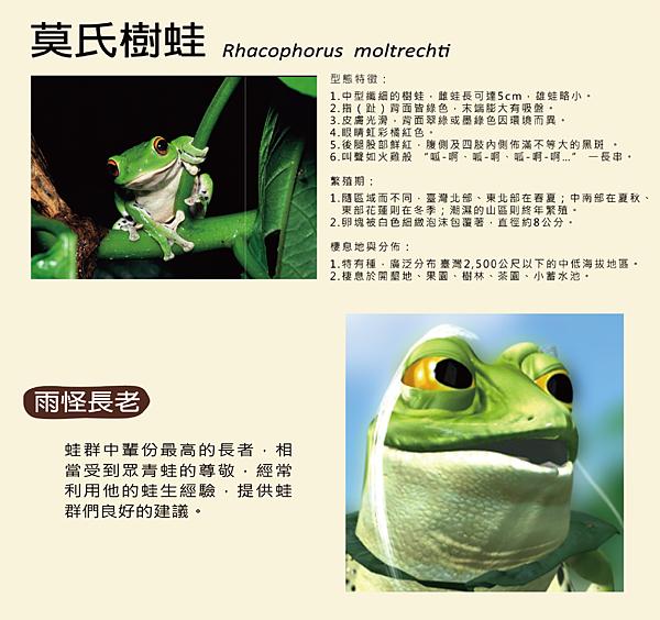 莫氏樹蛙-3-01-01