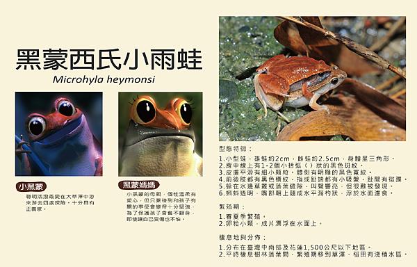 黑蒙青蛙-01