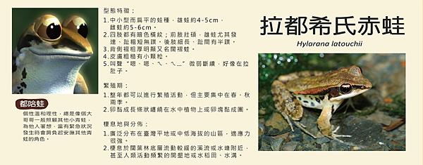 哈都希氏赤蛙-01