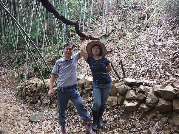 凌雲山莊中親林的步道