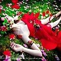 玫瑰精靈4