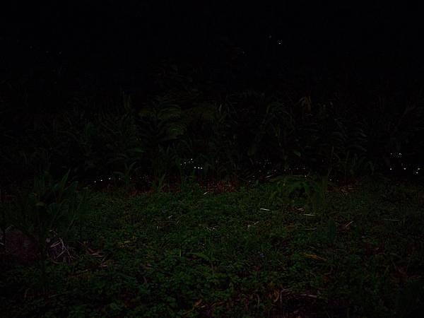 螢火蟲疊圖4