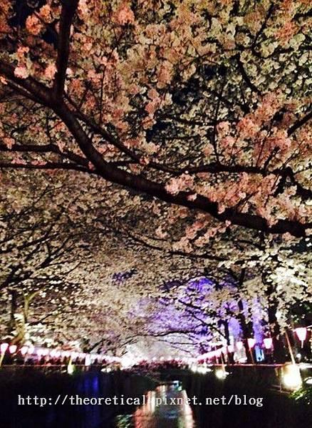 上野公園夜櫻2