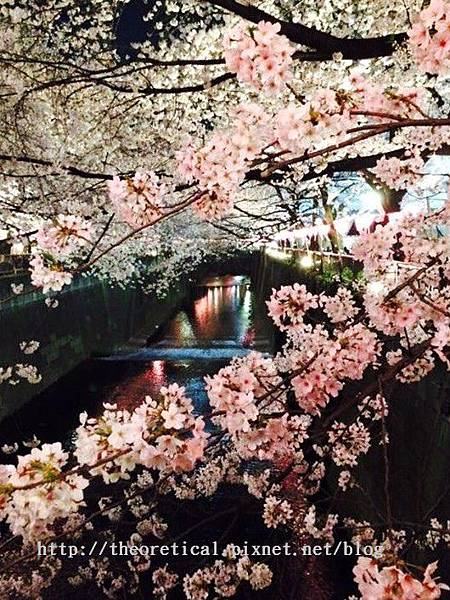 上野公園夜櫻