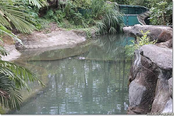 最愛的鱷魚