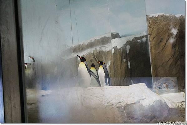 剛進企鵝館就廣播要閉館了