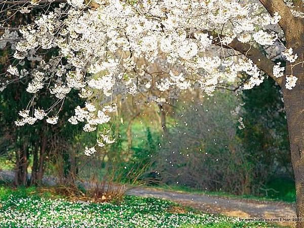 %5Bwallcoo%5D_spring_flower_162825.jpg