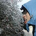 結滿冰的樹