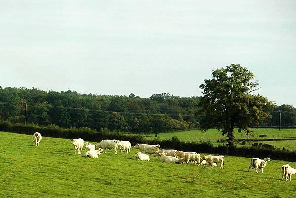 TGV沿途的景色-牧場