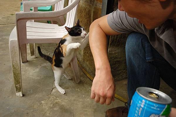 遇上可愛的小貓