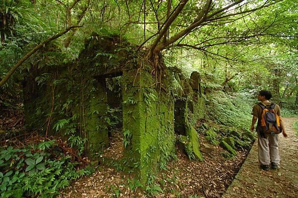 有趣的綠屋