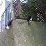 江之島一景:貓